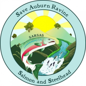 Save Auburn Ravine Salmon and Steelhead